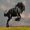 Cavallo Nero Di Puzzle
