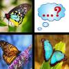 Farfalla Memory Match